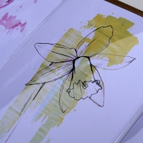 'daffodil' close up