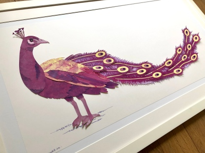 pink peacock by chris cowdrill