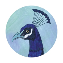 peacock - digital blue by chris cowdrill