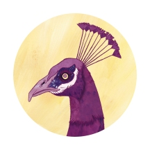 peacock - digital pink by chris cowdrill