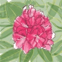 rhododendron flower - ipad sketch by chris cowdrill
