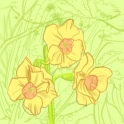 narcissus - small daffodil - ipad sketch by chris cowdrill