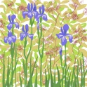 irises - ipad sketch by chris cowdrill