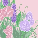 sweet peas 1 - ipad sketch by chris cowdrill